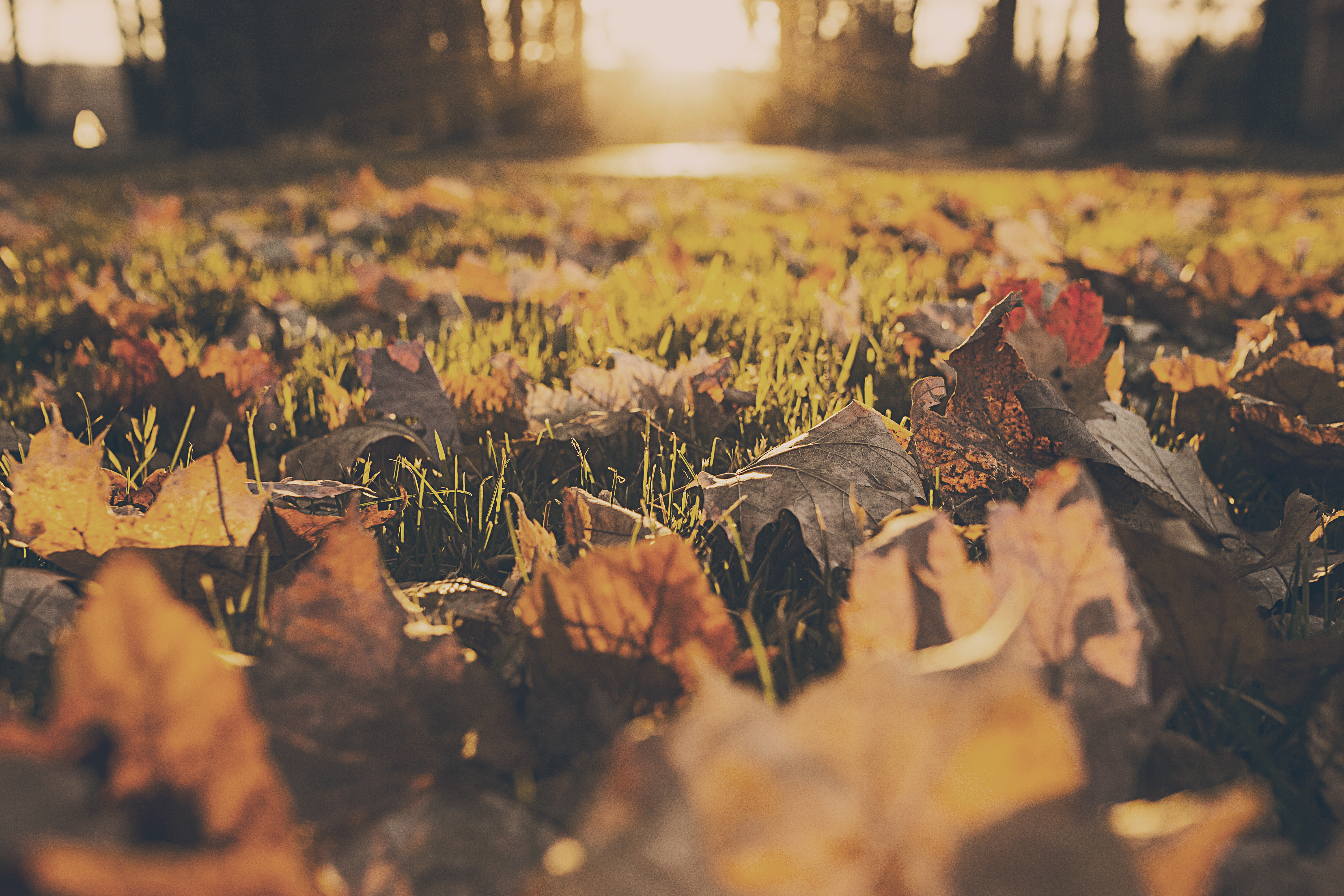 forest-meadow-leaves-autumn-1