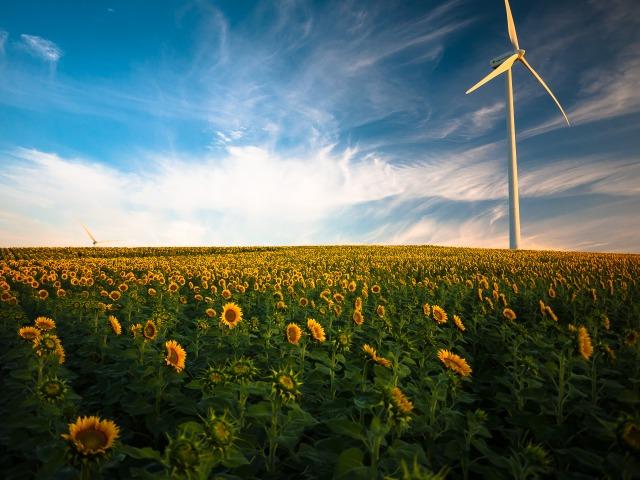 Sunflowers&Windmill