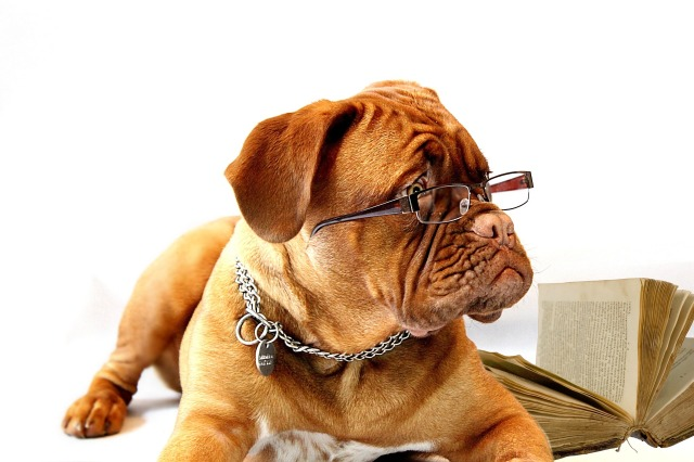 Dog-With-Glasses&Book